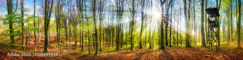 panorama-las-z-sloncem-w-wiosnie