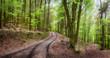 Forstweg im schönen Wald lädt zum Wandern ein
