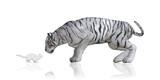 Cat Tiger Reflection