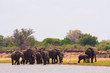 Elephants drinking water at the waterhole