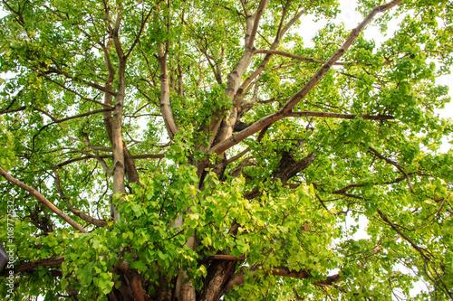 Poster Landschappen Green tree in forest