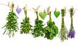 frische duft- und heilpflanzen