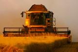 Harvest in golden light