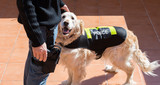 Police dog with distinctive