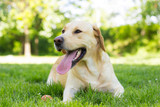 Happy dog face