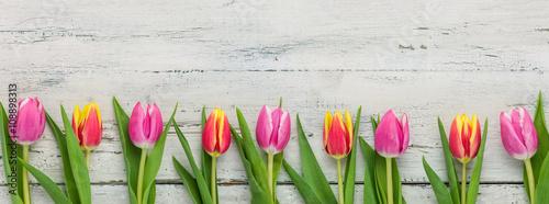 fototapeta na ścianę Tulpen auf weißem Holzhintergrund mit Textfreiraum