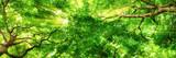 Sonnenstrahlen leuchten durch Blätterdach hoher Bäume