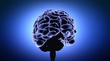 Brain with blue background in action