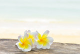 Frangipani tropical flowers with beach background