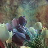 bouquet of tulips on shabby grey background