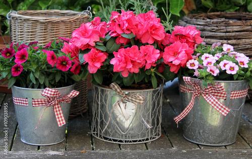 Blumentöpfe mit Petunien und Azalee auf einem Holztisch