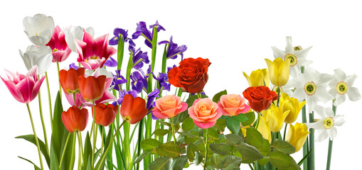 image of beautiful flowers in the garden on rays background
