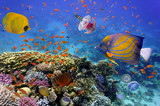 Coral Reef and Tropical Fish in the Red Sea - 109108918
