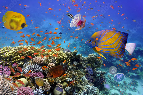 Coral Reef and Tropical Fish in the Red Sea Poster