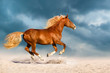 Beautiful red horse run fast in sand against dramatic sky