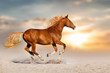 Red horse with long mane run gallop in desert dust against sunset sky