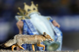 real fox leicester city football club wallpaper