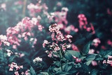 Beautiful fairy dreamy magic red pink flowers with dark green leaves, toned with instagram filter in retro vintage washed out pastel, soft selective focus, lens sun flare, copyspace