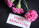 Pink carnation flowers with greeting card.