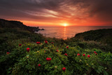 Magnificent sunrise view with beautiful wild peonies on the beach near Tylenovo, Bulgaria - 109326995