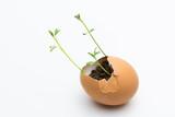 plántulas en cascarón de huevo