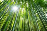 Bamboo forest, Arashiyama, Kyoto, Japan