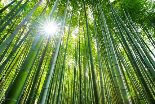Poster Kyoto Bamboo forest, Arashiyama, Kyoto, Japan