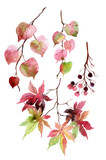 Watercolor autumn leaves, branches and berry. - 109484712