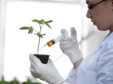 Scientist pouring chemistry into flower pot