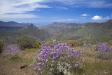 Gran Canaria, Caldera de Tejeda in April