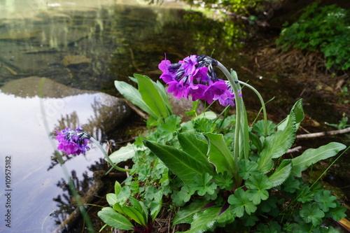 Zdjęcia na płótnie, fototapety, obrazy : Цветок у воды