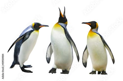 Plexiglas Pinguin Emperor penguins