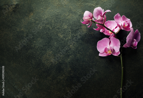 Pink orchid on a dark background - 109598308