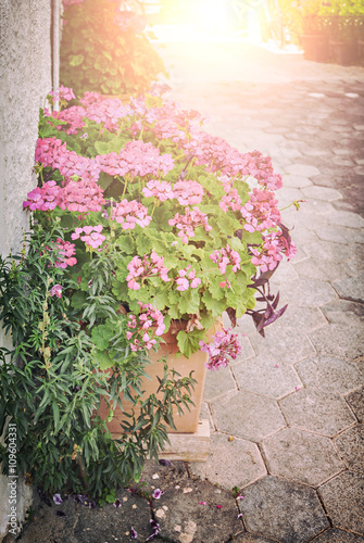 Potted pink flowers