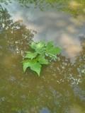 foglie trasportate dallacqua