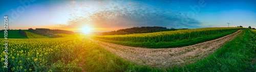 Panorama landscape rapeseed canola field in morning