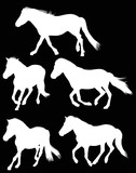 five running white horses on black