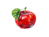 Fototapety Watercolor summer insulated red apple