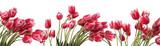 Flower field - 109710799