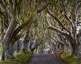 The Dark Hedges near Ballymoney, Co. Antrim, Northern Ireland.  Feautured in the Game of Thrones as the Kings Road. - 109730790