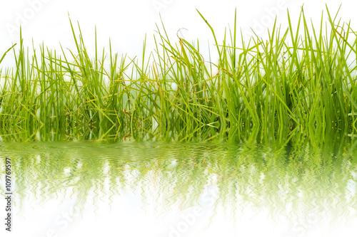 Poster brins d'herbes, flore aquatique