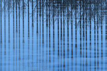 canes of bamboo reflected in blue water pond