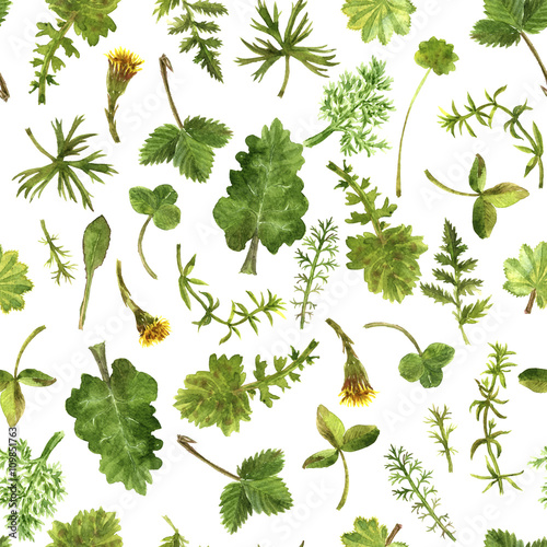 Seamless pattern with watercolor drawing herbs and leaves - 109851763