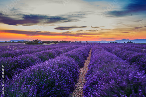 Panel Szklany Lavanda fields. Provence