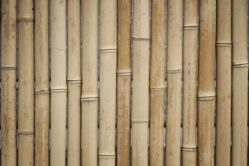 Bamboo pattern © ocipalla