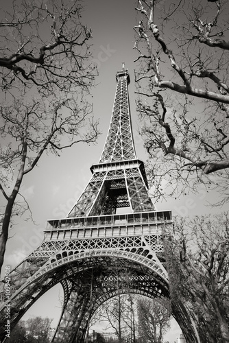 Poster Black and White vertical view of the Eiffel Tower through tree branches on the C