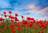 Amazing poppy field landscape against colorful sky