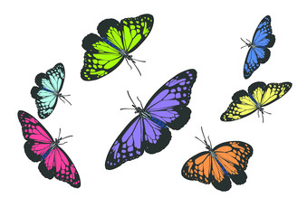 illustration butterflies design isolated with white