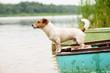 Summer scene: wet dog standing on river boat