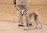 greyhound-biarritz-france